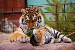 Лимпопо, зоопарк