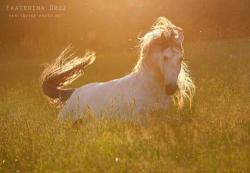 Конь-огонь, конное хозяйство