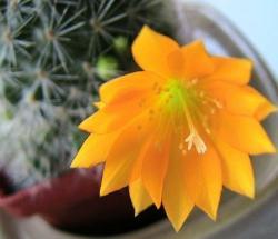 kaktus_12.jpg