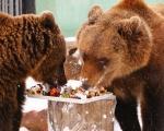 Медведи в «Лимпопо» не впали в спячку